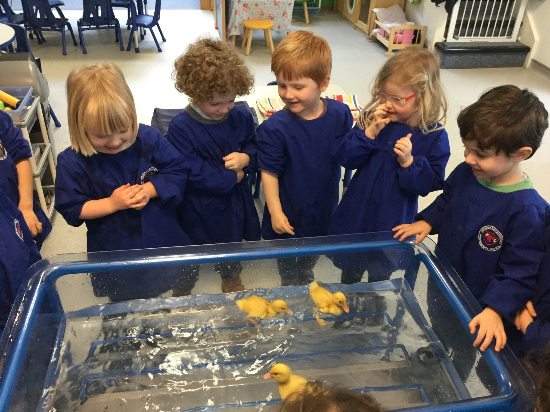 Delightful Ducklings and the Super Science Workshop