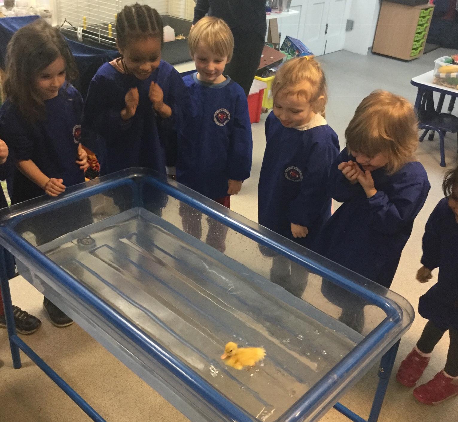 Delightful Ducklings in Nursery!