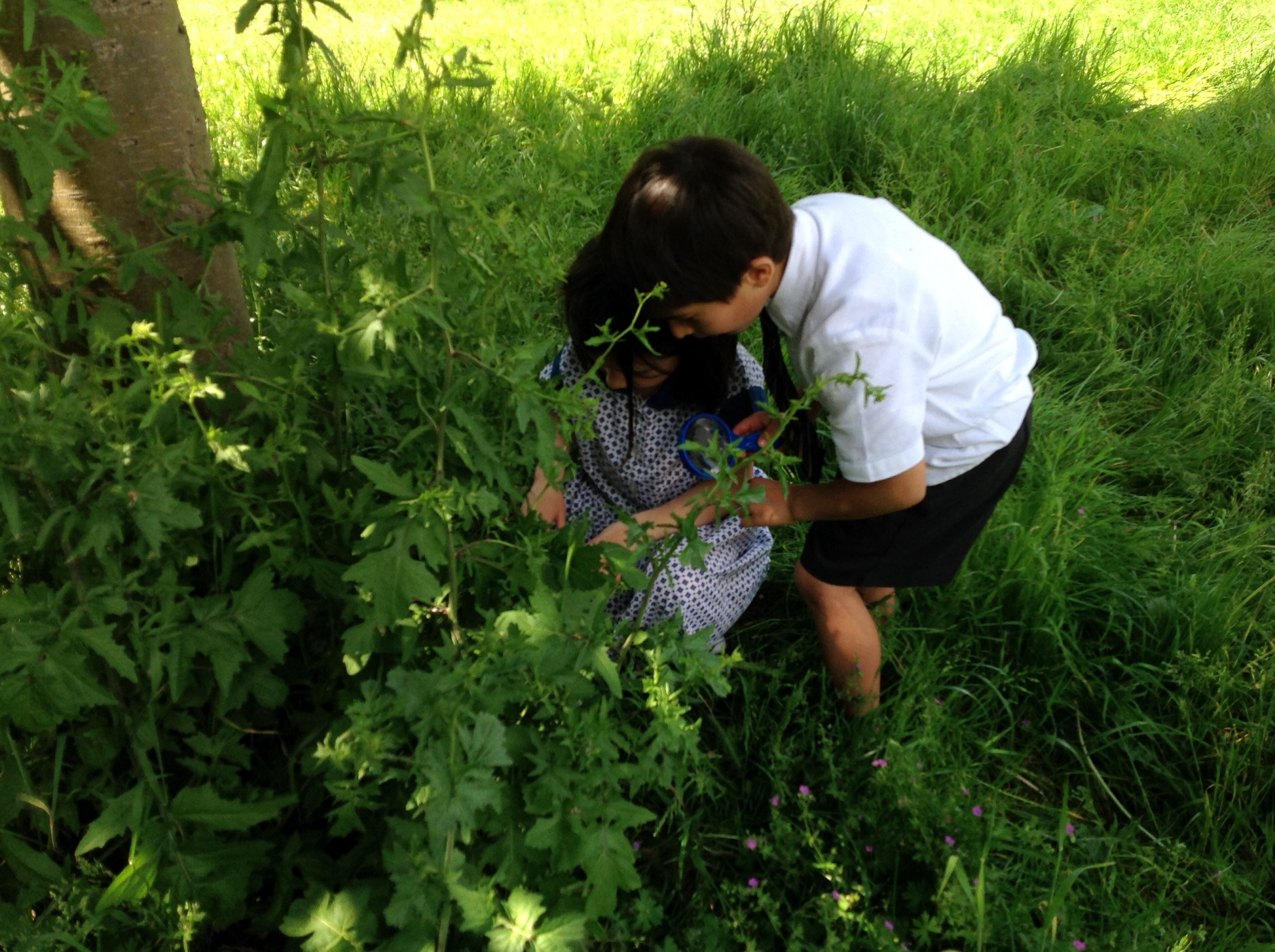 Reception hunt for minibeasts with the RSPB!